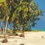 Cultura afro em Alagoas