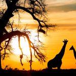 O ano novo dos Swazis